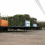 Trees Ready for Delivery